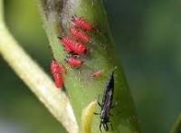 биологические борьбы с вредителями