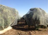 защита растений сетка