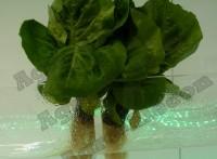 Выставка Арава - салат