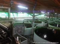 курсы по разведению рыбы в УЗВish 2015