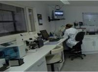 трансплантация эмбрионов крупного рогатого скота и создание эмбрионального центра
