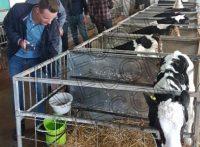 Курс: составление рационов, кормление и управление стадом КРС